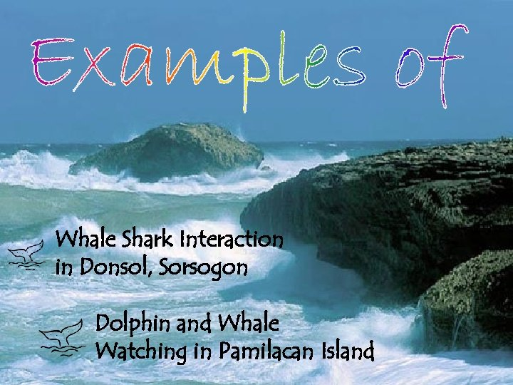 Whale Shark Interaction in Donsol, Sorsogon Dolphin and Whale Watching in Pamilacan Island