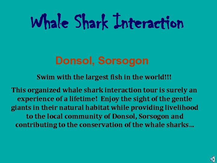 Whale Shark Interaction Donsol, Sorsogon Swim with the largest fish in the world!!! This