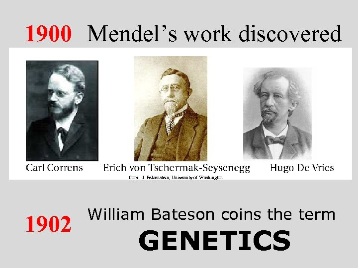 1900 Mendel's work discovered from: J. Felsenstein, University of Washington 1902 William Bateson coins