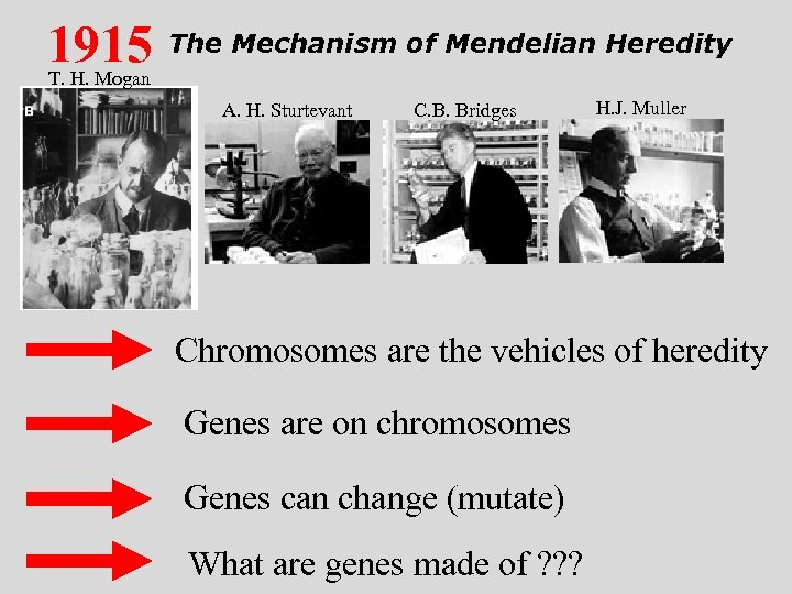 1915 The Mechanism of Mendelian Heredity T. H. Mogan A. H. Sturtevant C. B.
