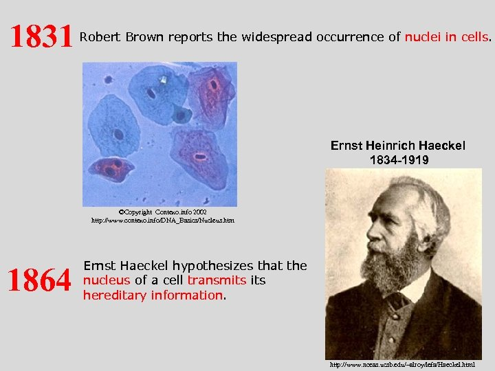 1831 Robert Brown reports the widespread occurrence of nuclei in cells. Ernst Heinrich Haeckel