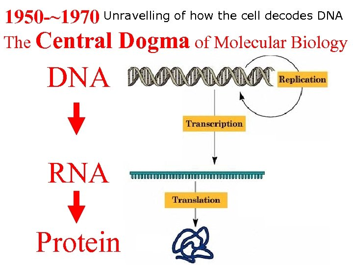 1950 -~1970 Unravelling of how the cell decodes DNA The Central Dogma of Molecular