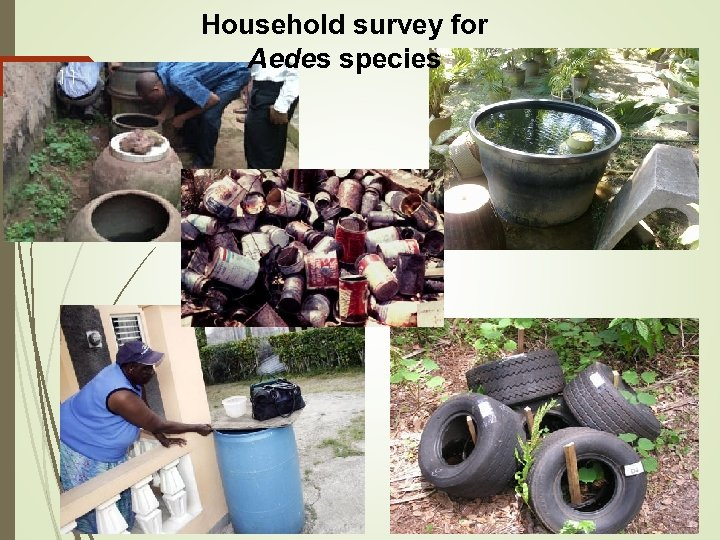 11 Household survey for Aedes species