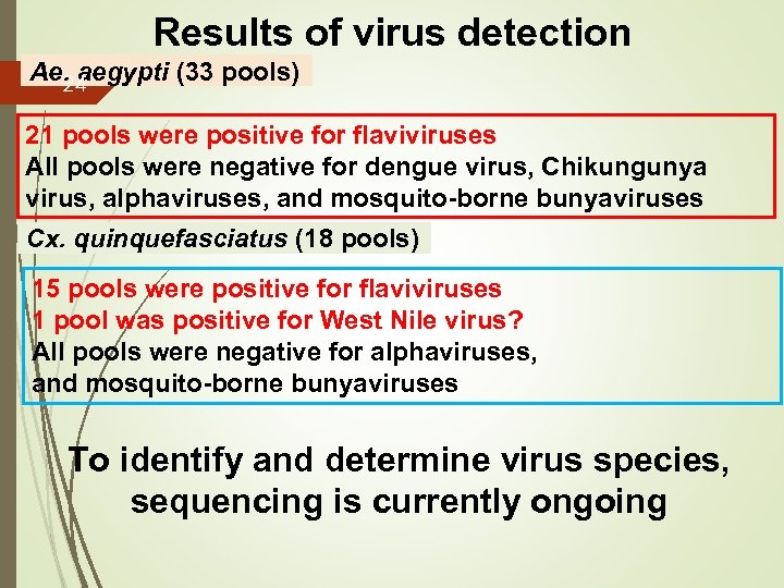Results of virus detection Ae. aegypti (33 pools) 24 21 pools were positive for