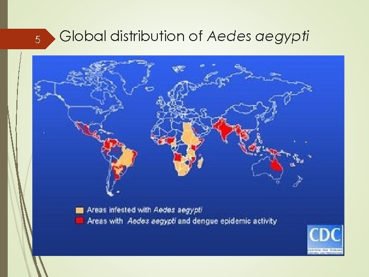 5 Global distribution of Aedes aegypti