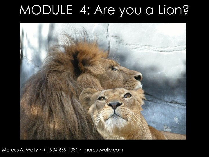 MODULE 4: Are you a Lion? Marcus A. Wally · +1. 904. 669. 1081