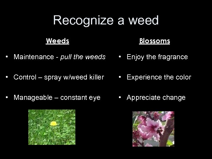 Recognize a weed Weeds Blossoms • Maintenance - pull the weeds • Enjoy the