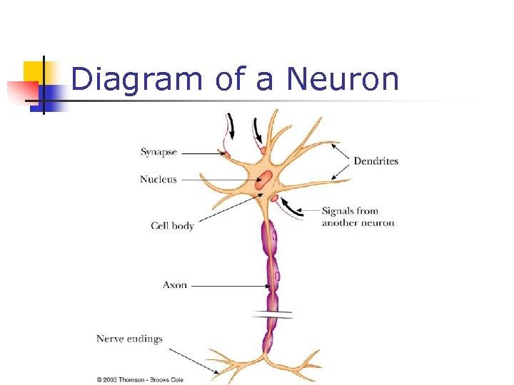 Diagram of a Neuron