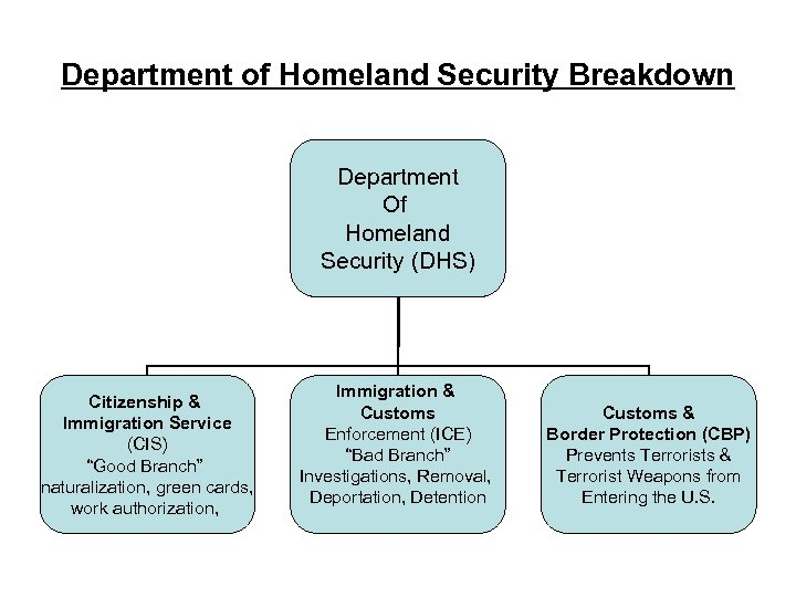 Department of Homeland Security Breakdown Department Of Homeland Security (DHS) Citizenship & Immigration Service