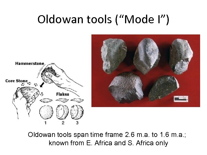 "Oldowan tools (""Mode I"") Oldowan tools span time frame 2. 6 m. a. to"