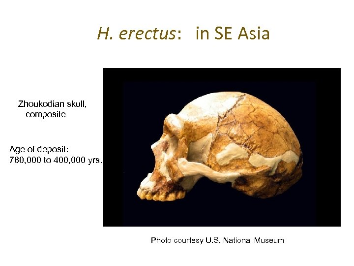 H. erectus: in SE Asia Zhoukodian skull, composite Age of deposit: 780, 000 to