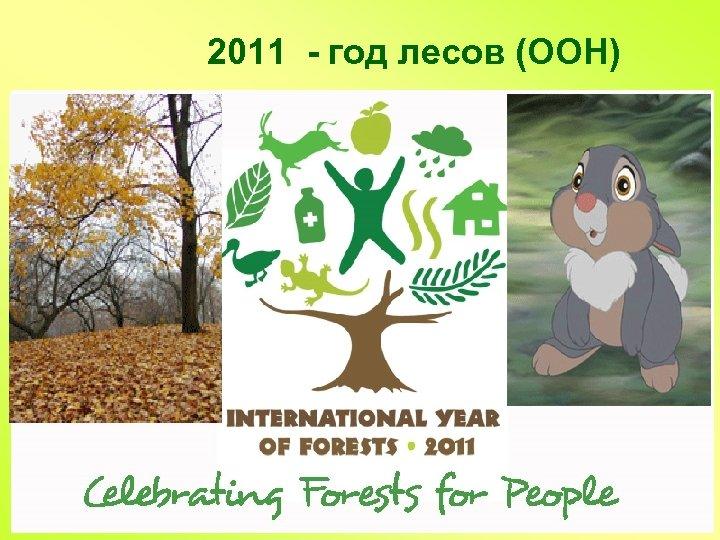 2011 - год лесов (ООН)