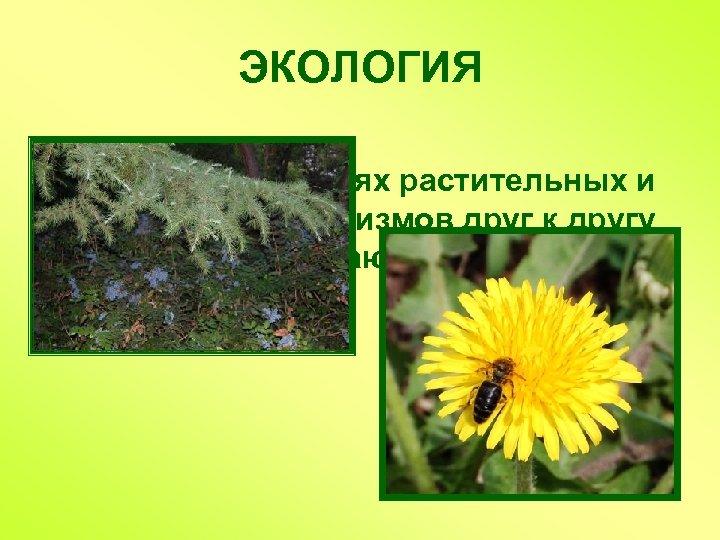 ЭКОЛОГИЯ Наука об отношениях растительных и животных организмов друг к другу и к окружающей