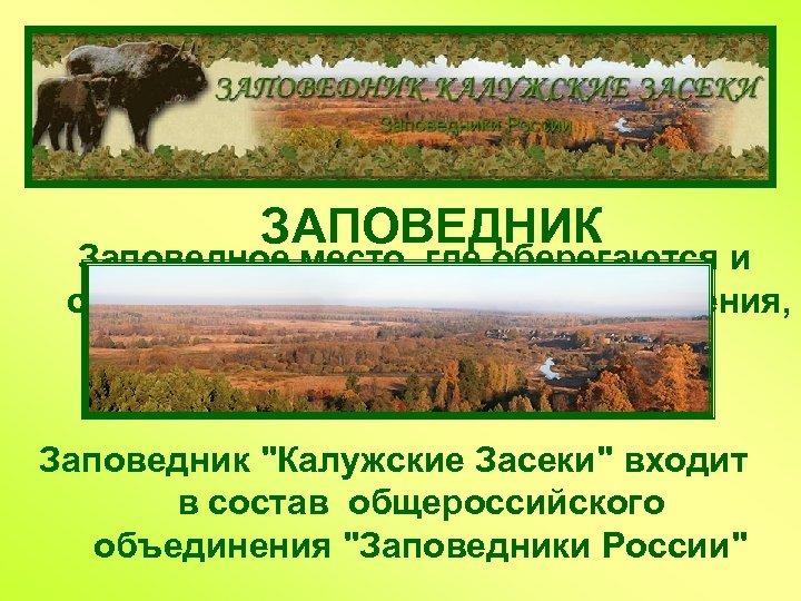ЗАПОВЕДНИК Заповедное место, где оберегаются и сохраняются редкие и ценные растения, животные, уникальные участки