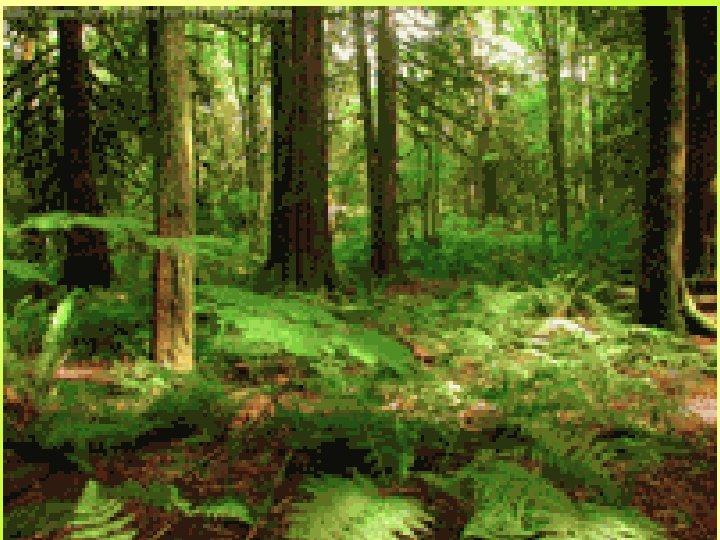Путешествие в Зелёную страну Удивительную Зелёную страну населяют удивительные жители: в перьях, в шерсти,