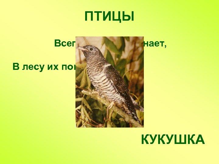 ПТИЦЫ Всего две буквы знает, В лесу их повторяет КУКУШКА