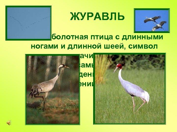 ЖУРАВЛЬ Большая болотная птица с длинными ногами и длинной шеей, символ надежды и удачи,
