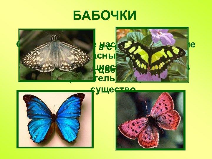 БАБОЧКИ Самые красивые насекомые. Хрупкие Не птичка, а с крыльями. и прекрасные создания, превращающиеся
