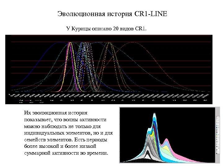 Эволюционная история CR 1 -LINE У Курицы описано 20 видов CR 1. Их эволюционная