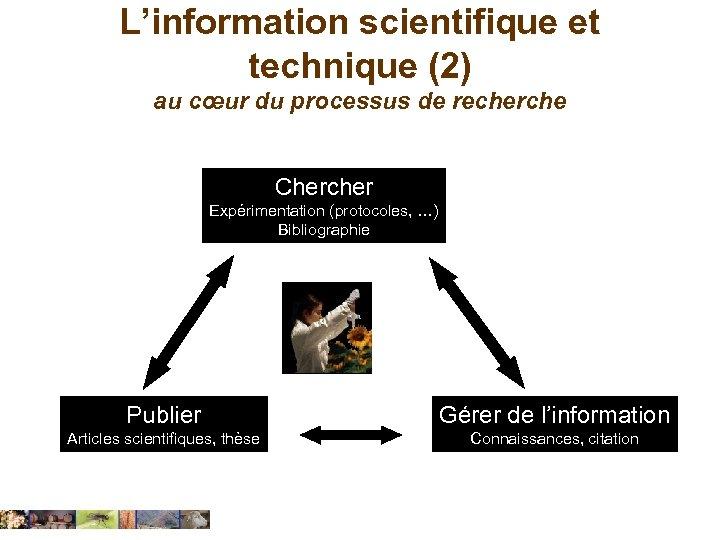 L'information scientifique et technique (2) au cœur du processus de recherche Chercher Expérimentation (protocoles,
