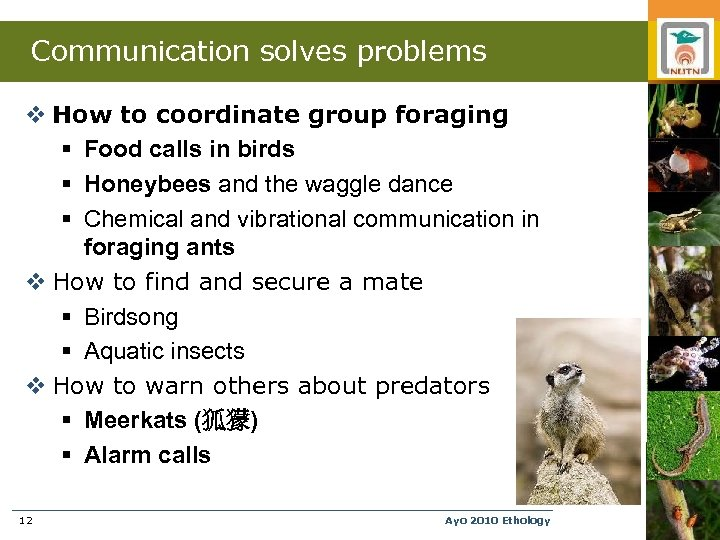 Communication solves problems v How to coordinate group foraging § Food calls in birds