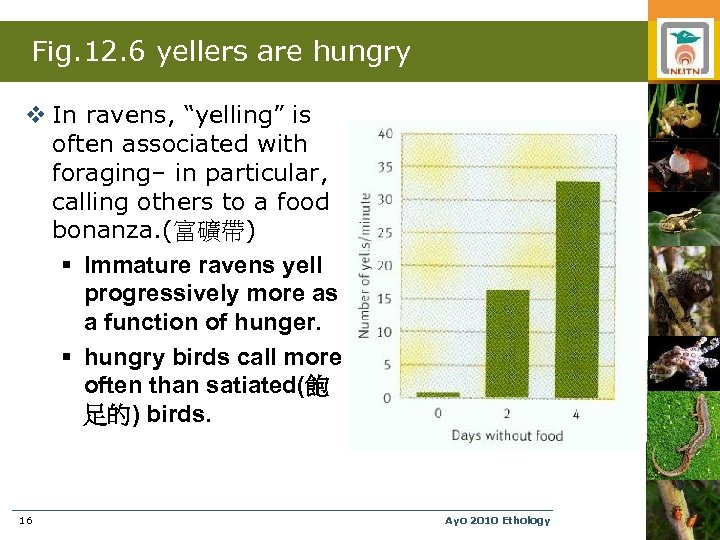 """Fig. 12. 6 yellers are hungry v In ravens, """"yelling"""" is often associated with"""