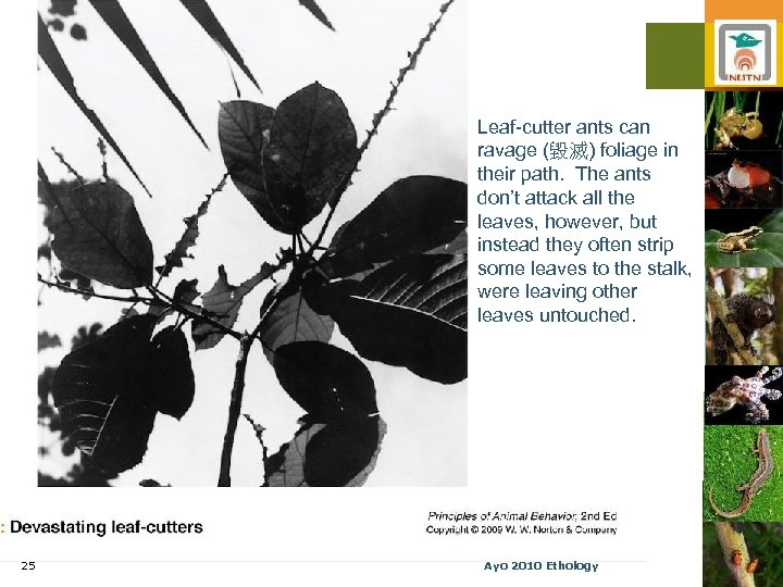 Leaf-cutter ants can ravage (毀滅) foliage in their path. The ants don't attack all