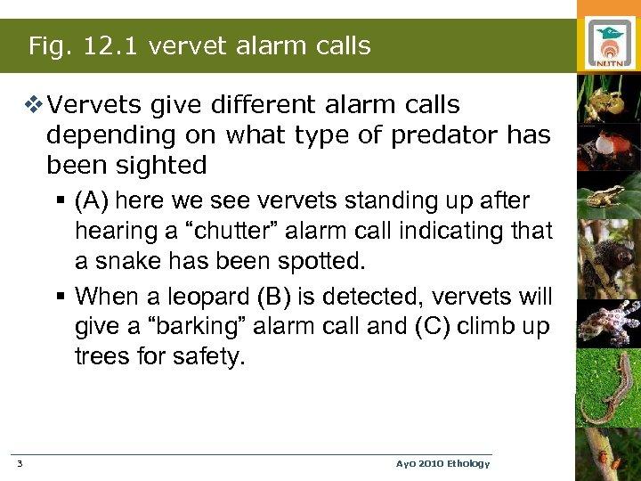 Fig. 12. 1 vervet alarm calls v Vervets give different alarm calls depending on