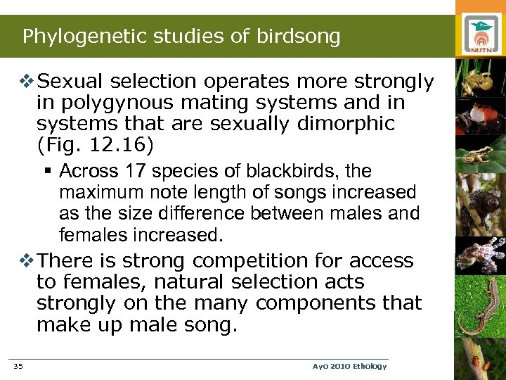 Phylogenetic studies of birdsong v Sexual selection operates more strongly in polygynous mating systems