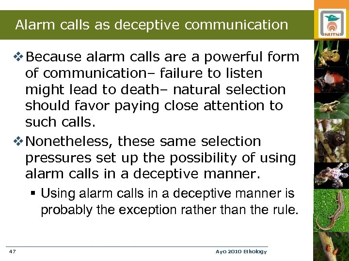 Alarm calls as deceptive communication v Because alarm calls are a powerful form of