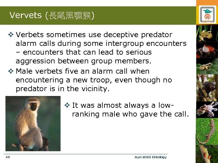 Vervets (長尾黑顎猴) v Verbets sometimes use deceptive predator alarm calls during some intergroup encounters