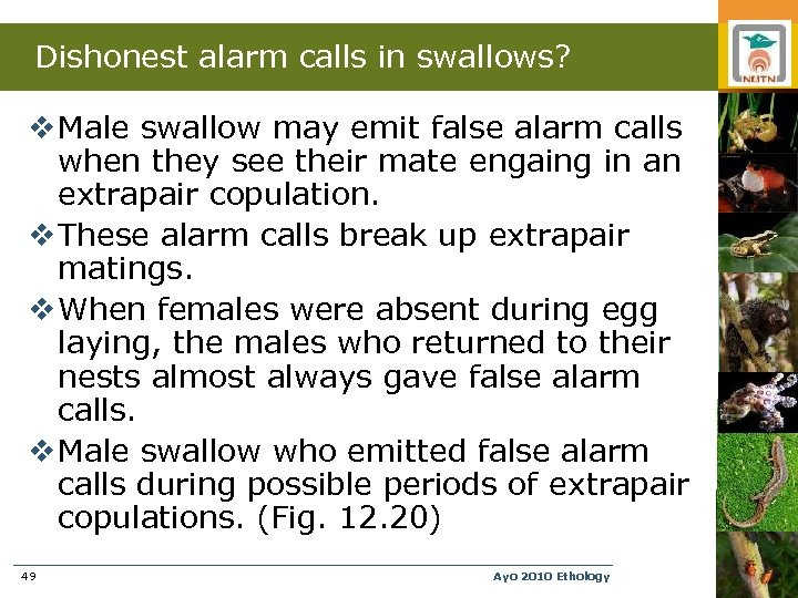 Dishonest alarm calls in swallows? v Male swallow may emit false alarm calls when