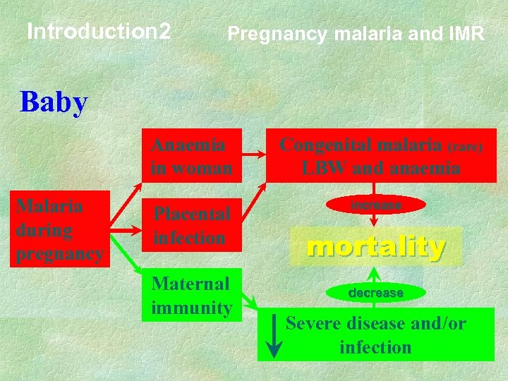 Introduction 2 Pregnancy malaria and IMR Baby Anaemia in woman Malaria during pregnancy Placental