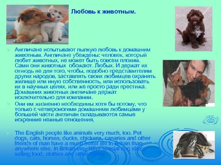 Любовь к животным. Англичане испытывают пылкую любовь к домашним животным. Англичане убеждены: человек, который
