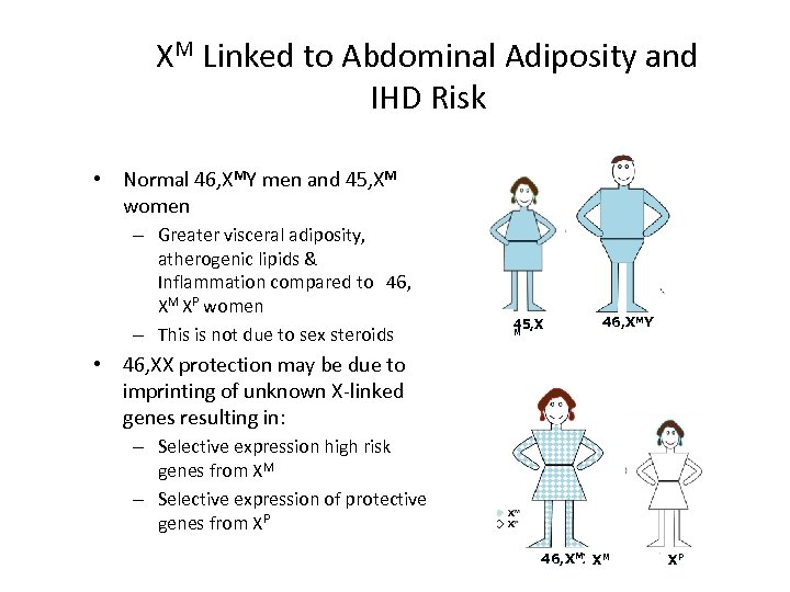 XM Linked to Abdominal Adiposity and IHD Risk • Normal 46, XMY men and