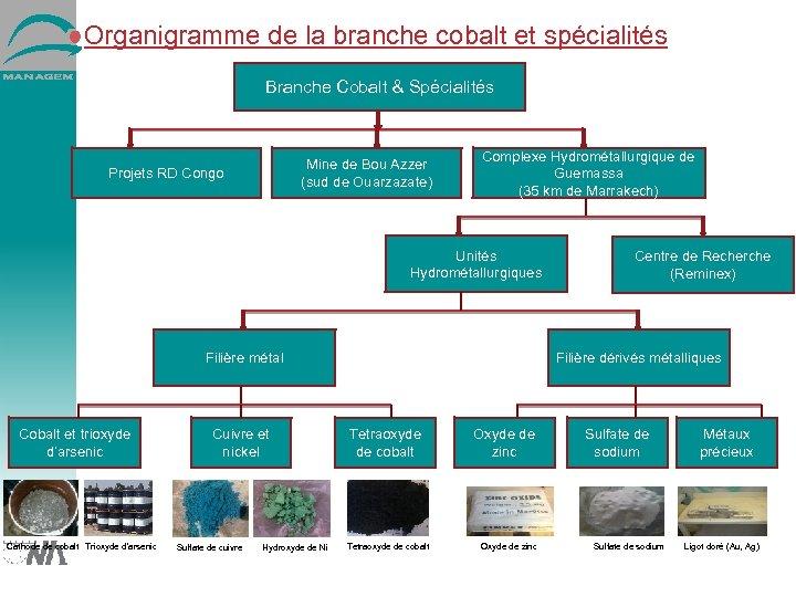 Organigramme de la branche cobalt et spécialités Branche Cobalt & Spécialités Mine de Bou