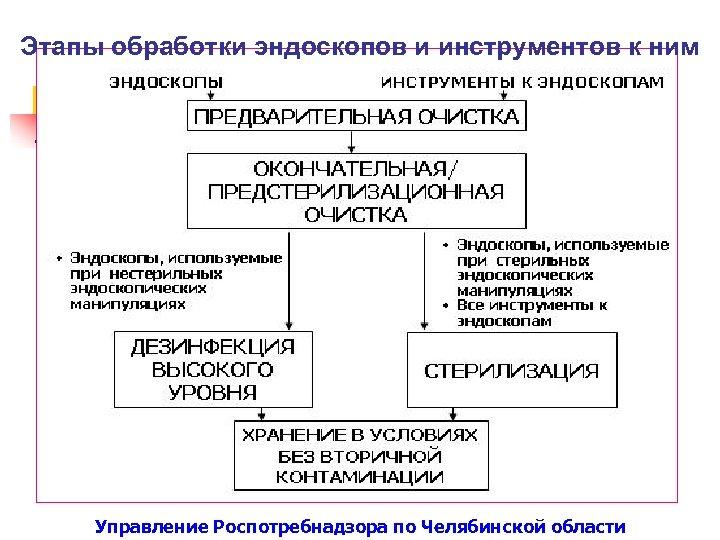 Этапы обработки эндоскопов и инструментов к ним Управление Роспотребнадзора по Челябинской области