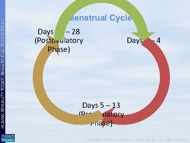 Menstrual Cycle Days 14 – 28 (Postovulatory Phase) Days 5 – 13 (Preovulatory Phase)
