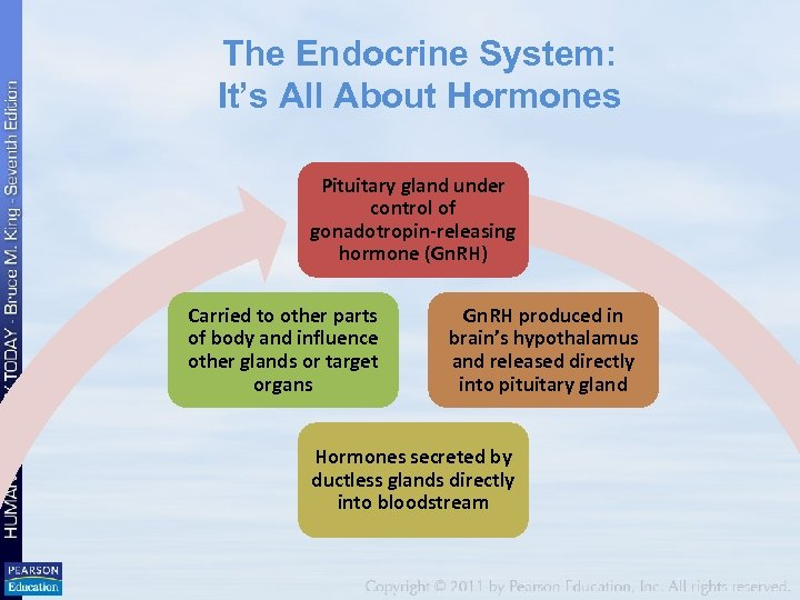 The Endocrine System: It's All About Hormones Pituitary gland under control of gonadotropin-releasing hormone