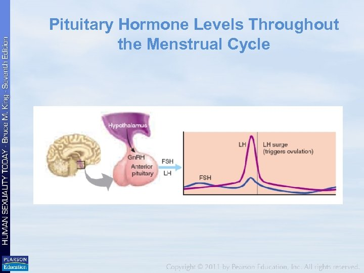 Pituitary Hormone Levels Throughout the Menstrual Cycle