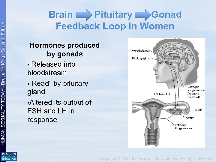 Brain Pituitary Gonad Feedback Loop in Women Hormones produced by gonads • Released into