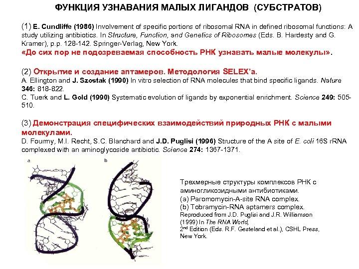 ФУНКЦИЯ УЗНАВАНИЯ МАЛЫХ ЛИГАНДОВ (СУБСТРАТОВ) (1) E. Cundliffe (1986) Involvement of specific portions of