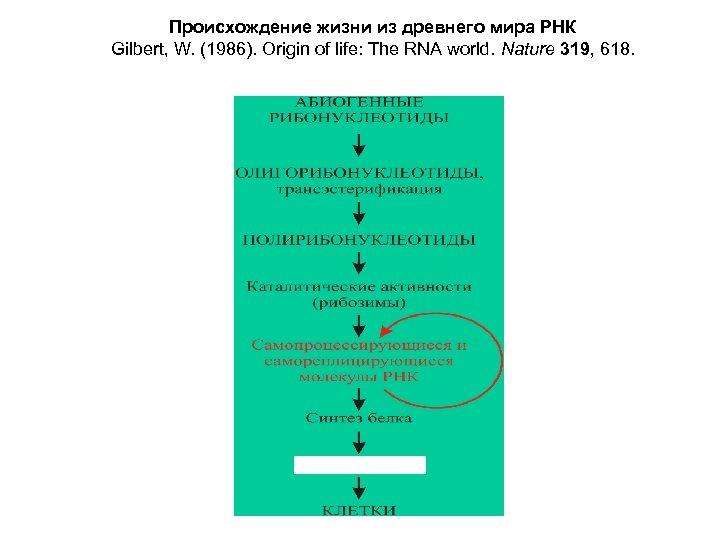 Происхождение жизни из древнего мира РНК Gilbert, W. (1986). Origin of life: The RNA