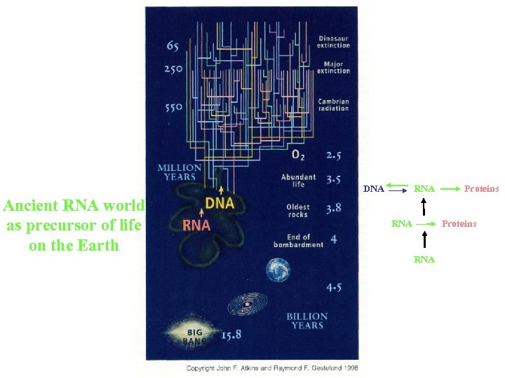 DNA Ancient RNA world as precursor of life on the Earth RNA Proteins