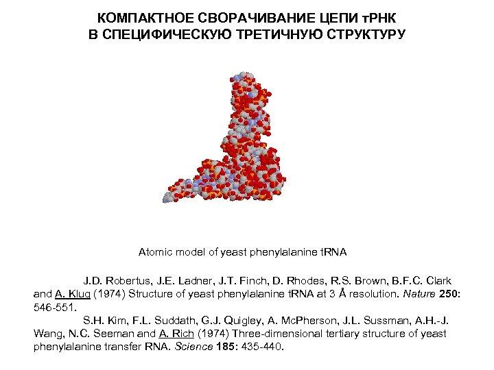 КОМПАКТНОЕ СВОРАЧИВАНИЕ ЦЕПИ т. РНК В СПЕЦИФИЧЕСКУЮ ТРЕТИЧНУЮ СТРУКТУРУ Atomic model of yeast phenylalanine