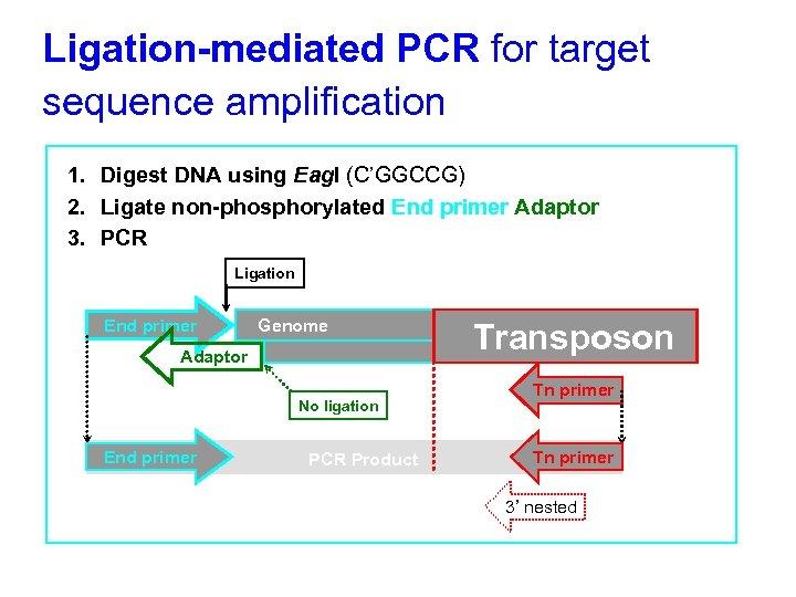 Ligation-mediated PCR for target sequence amplification 1. Digest DNA using Eag. I (C'GGCCG) 2.