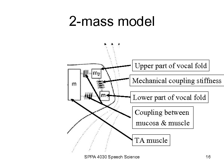 2 -mass model Upper part of vocal fold Mechanical coupling stiffness Lower part of