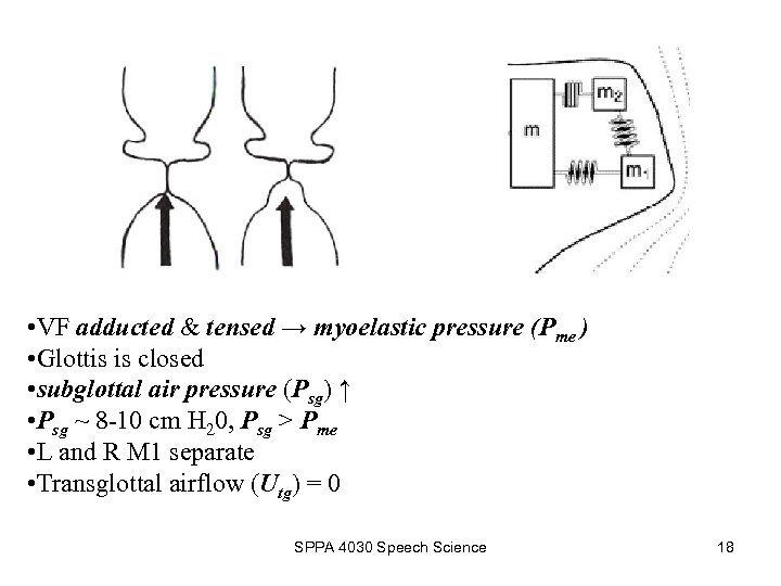 • VF adducted & tensed → myoelastic pressure (Pme ) • Glottis is