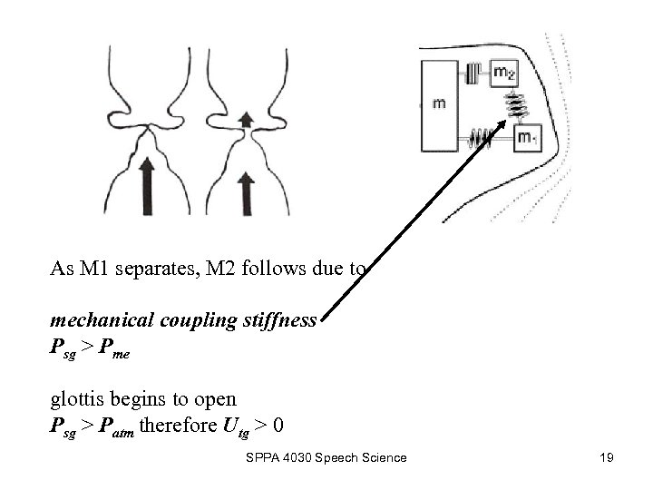 As M 1 separates, M 2 follows due to mechanical coupling stiffness Psg >