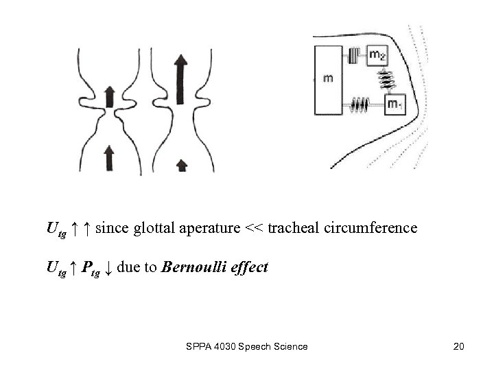 Utg ↑ ↑ since glottal aperature << tracheal circumference Utg ↑ Ptg ↓ due
